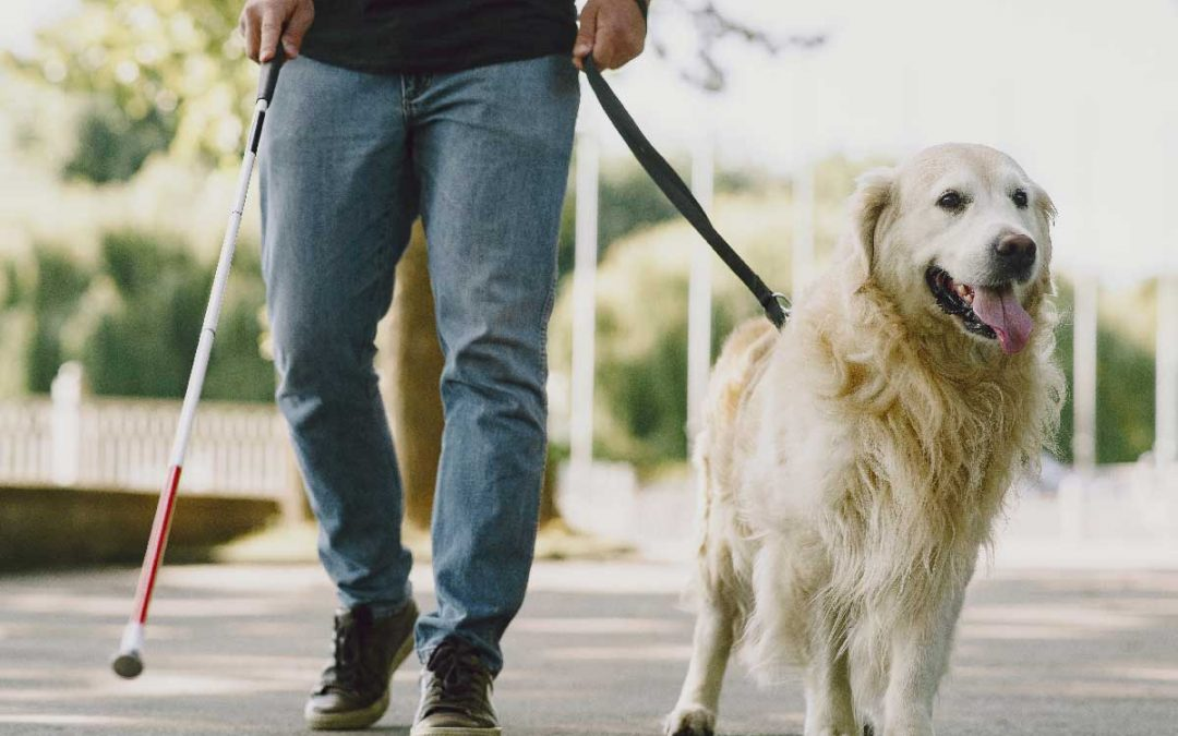 White Cane Dog Guide Safety Awareness Month 2020