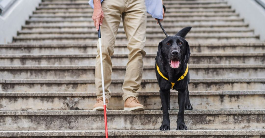 Man walking down some stairs with his Dog Guide and using a white cane