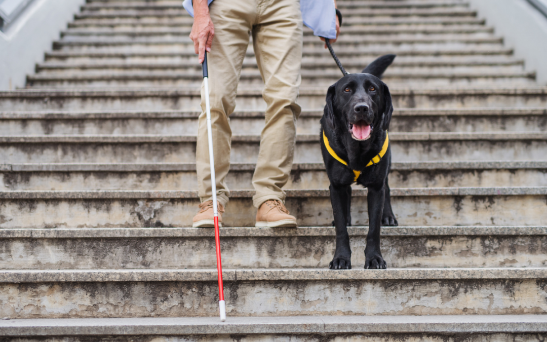 White Cane Dog Guide Safety Awareness Month